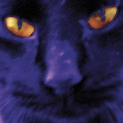 Kilgour, David & The Heavy Eights - Bobbie'S A Girl (LP)