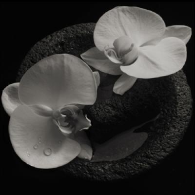 Mike Patton & Jean-Claude Vannier - Corpse Flower (LP)