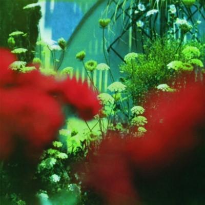 Pulled Apart By Horses - Haze (Green Vinyl) (LP)