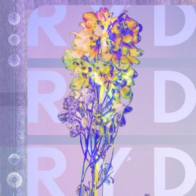 RYD - RYD
