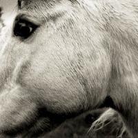 Bonny Light Horseman - Bonny Light Horseman (Blue Seagrass Vinyl) (LP)