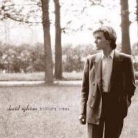 Sylvian, David - Brilliant Trees (cover)