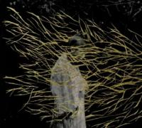 Forest Swords - Engravings (cover)