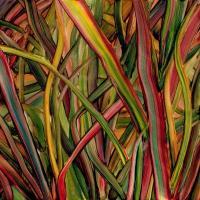 Gengahr - Where Wildness Grows (LP+Download)