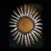 Fauna - Avifauna (Gold Vinyl) (LP)