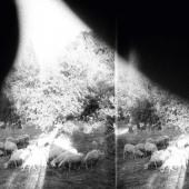 Godspeed You Black Emperor! - Asunder, Sweet And Other Distress