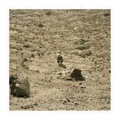 Howard, Ben - Noonday Dream (LP)