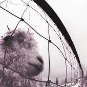 Pearl Jam - Vs. (Remastered) (LP)